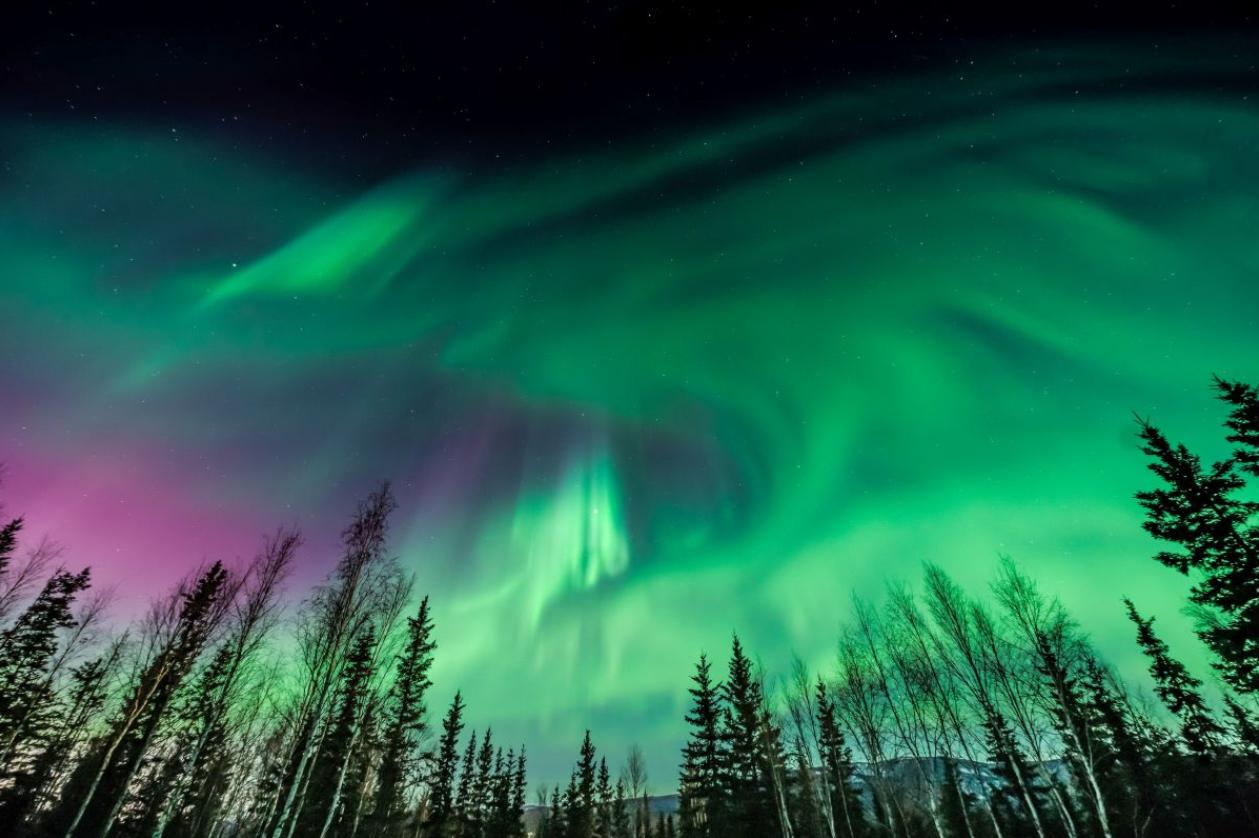 aurores boreales au dessus d'une foret de sapins