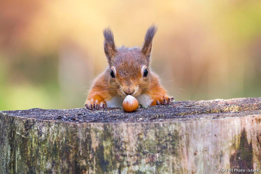 Top 10 animaux les plus mignons l'écureuil
