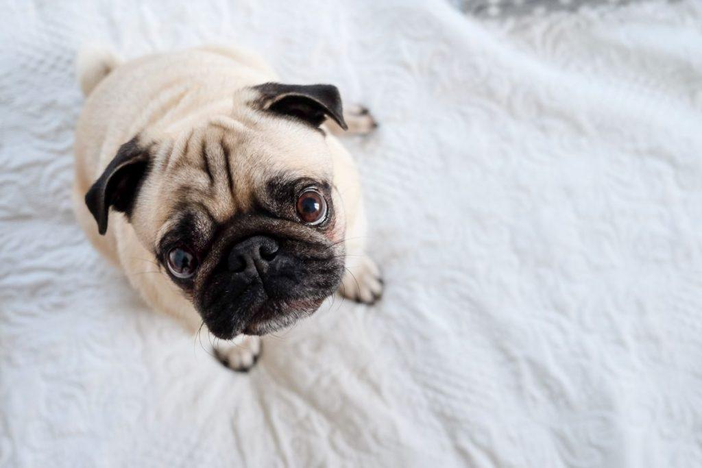 10 chiens trop mignons