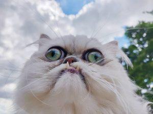 Les chats les plus moches du monde