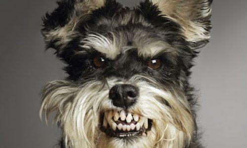 liste chiens les plus dangereux du monde